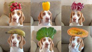 alimentos para cães